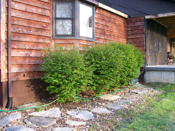 Landscaping Photo 4