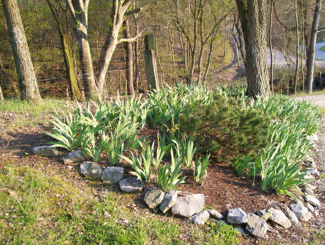 Landscaping Photo 5